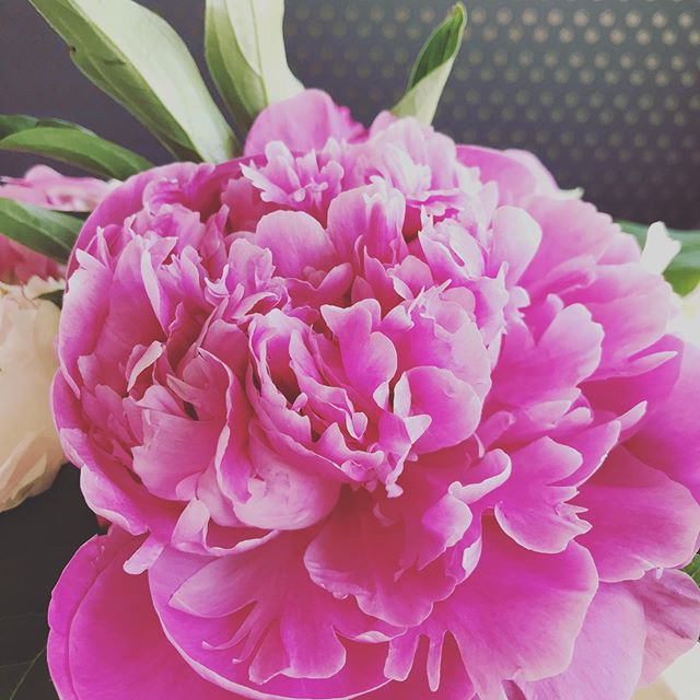 There is just something magical about peonies. #spring #peonies