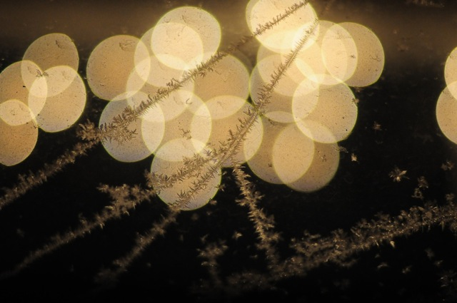frost - elli rader