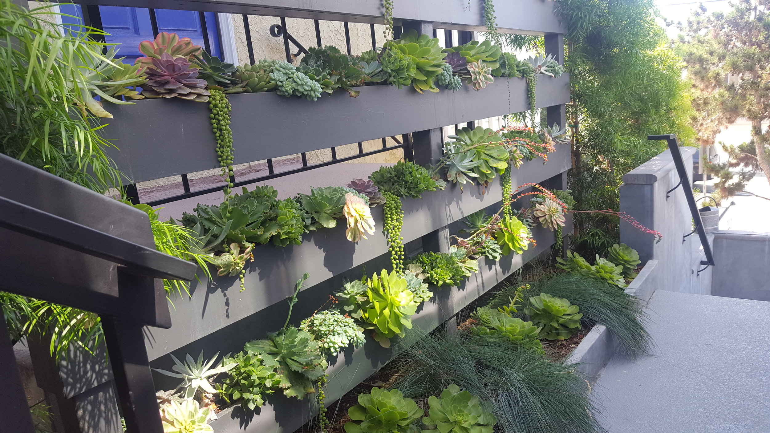 Dana Point Living Wall. Link to imagery