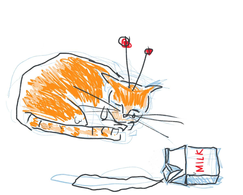 cat_orange-ss.jpg
