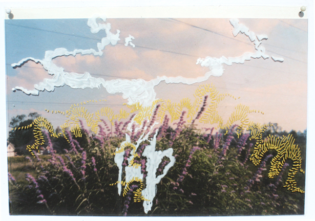 Mexican Sage, upper ditch, butterfly likes it, 2003