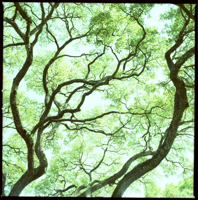 BranchingOut.JPG