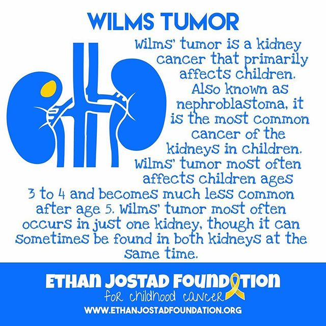 "Today's Childhood Cancer Awareness Education is about a kidney cancer called Wilms tumor. It is a cancer that primarily affects children and is not commonly found in adults. Wilms tumor accounts for about 90% of kidney tumors in children. About 95% of children with this tumor have a ""favorable histology"" (meaning a high cure rate with less treatment according to how the cells look under the microscope). The other 5% of these diagnoses have what is known as anaplastic Wilms tumor, which is much more resistant to treatment. #childhoodcancer #childhoodcancerawareness #gogold #morethan4 #honestlovesmax #ethanjostadfoundation"