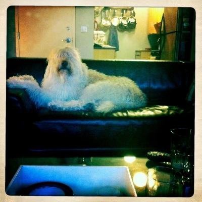Original shot of Ollie