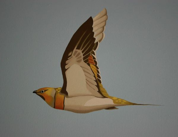 Pin-tailed sandgrouse detail