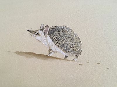 Desert hedgehog detail