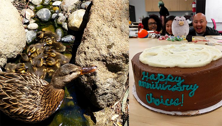 Desserts, office hijinks, and of course, who can forget the adorable ducklings in the courtyard?