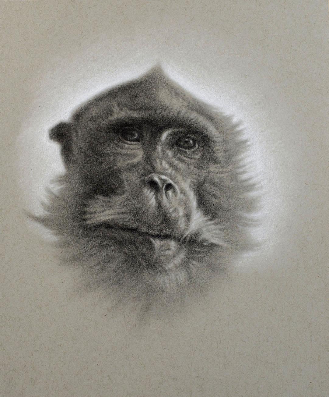 -Macaque drawing 1.jpg