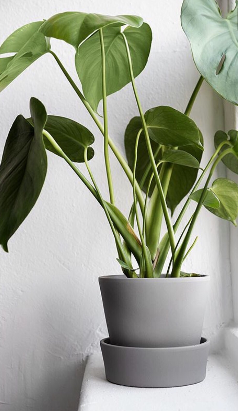 Looking for a plant to bring home.