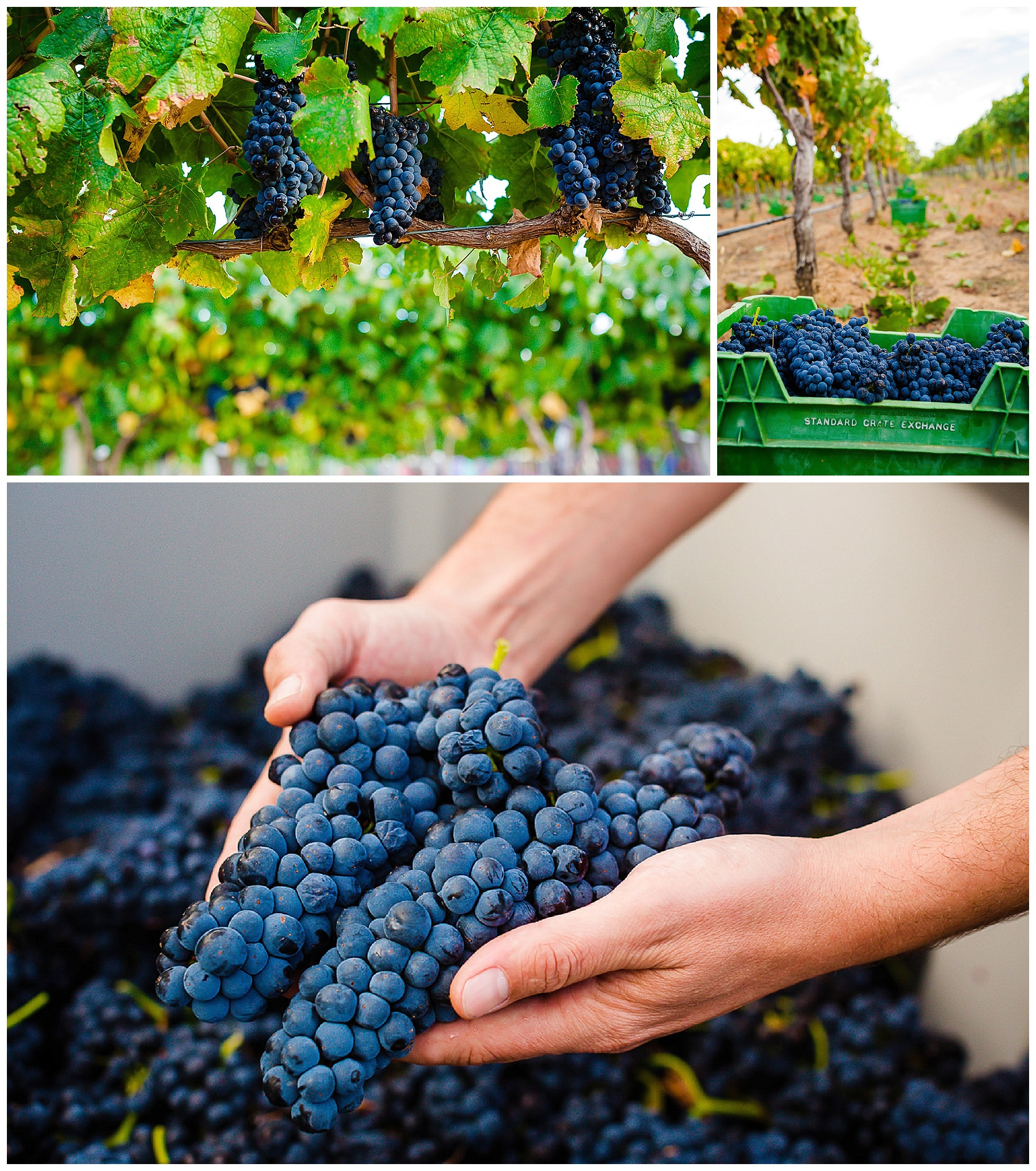 vineyard photography perth