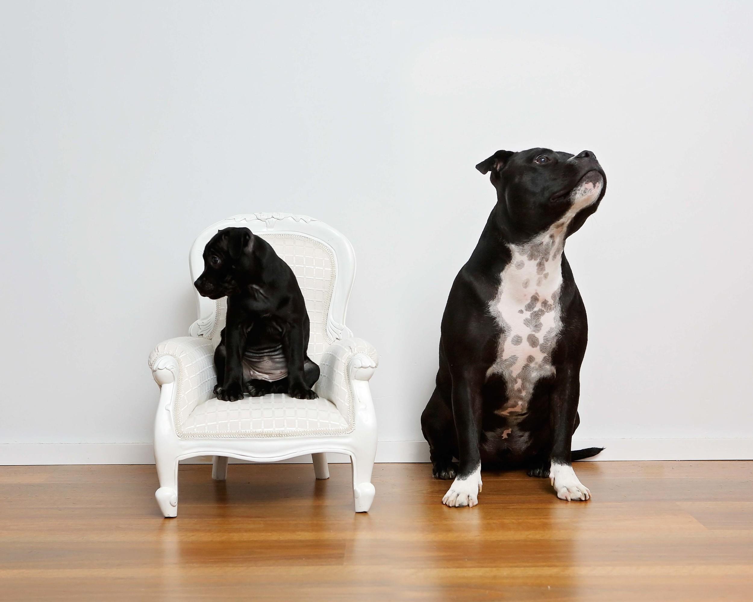 pet photographer perth