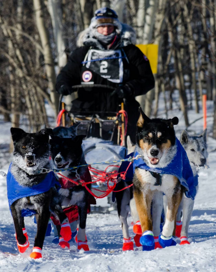 February, 2014 taken at the finish of the River Runner 140.  On the final run from Braeburn to Takhini it got down to -43C as evidenced by the frosty dogs and musher.  In lead here are Walter and Simba.  Annie, Hansel and Gretel are also in the picture.