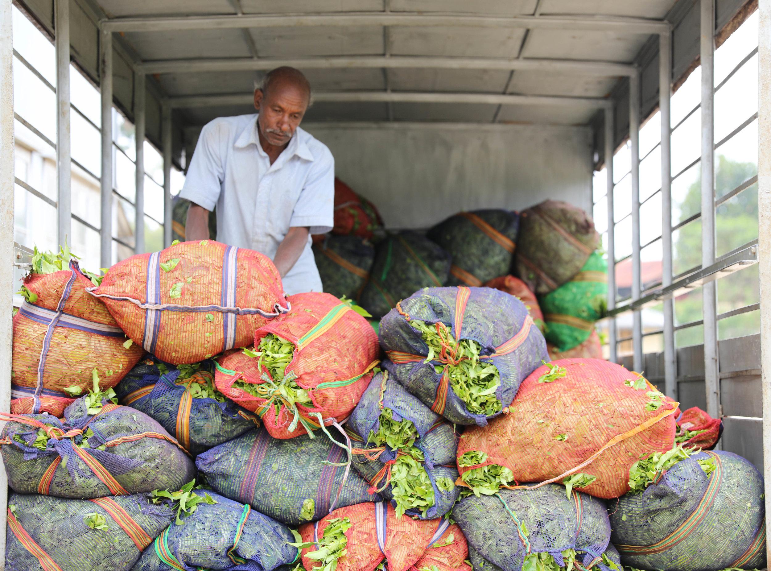 Tea factory delivery, Sri Lanka 2018. © Rupert Bedford