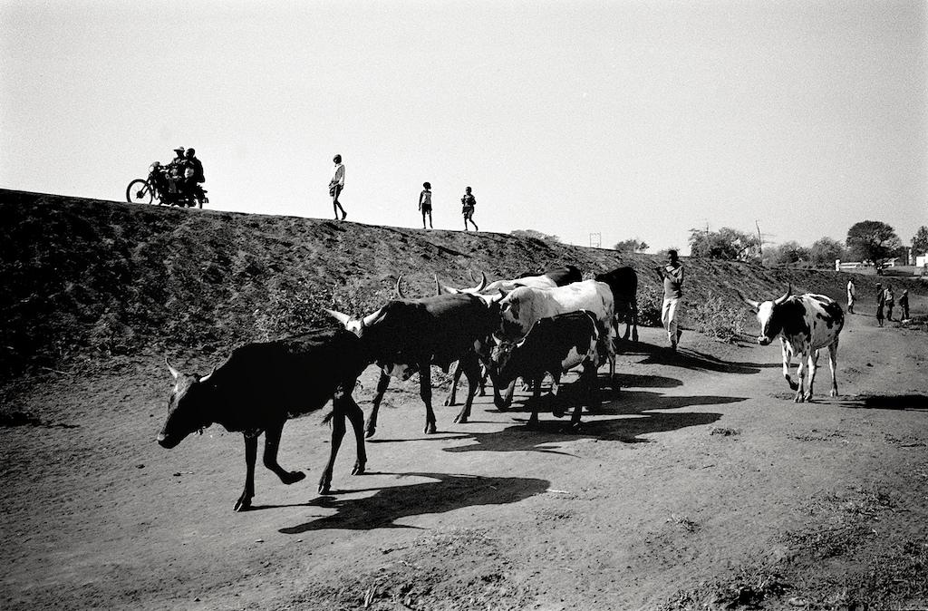 MOZAMBIQUE 011.jpg