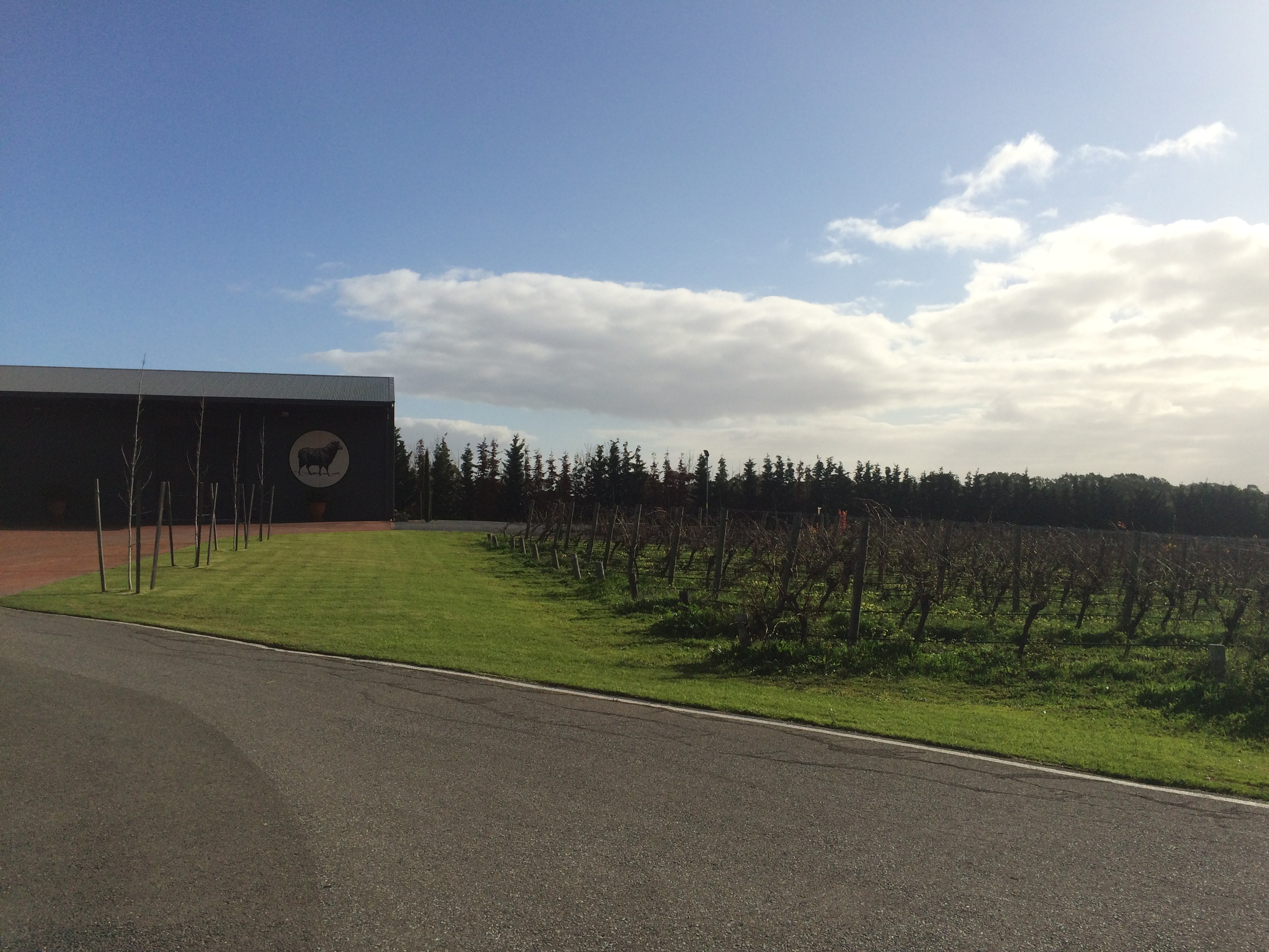 The vineyards owned by Hugh Hamilton Wines surround their shop with 360 degree views.