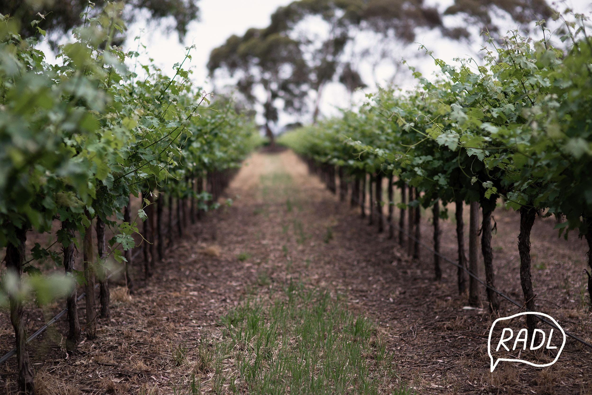 handpicked vineyard