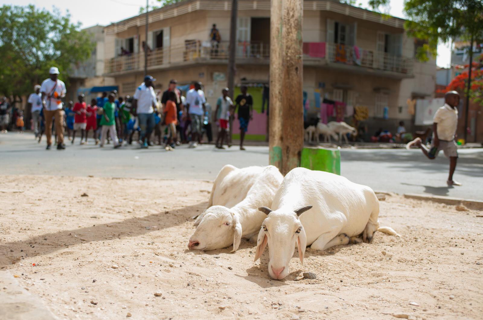 Senegal-16-1.jpg