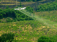 Aerial Eradication