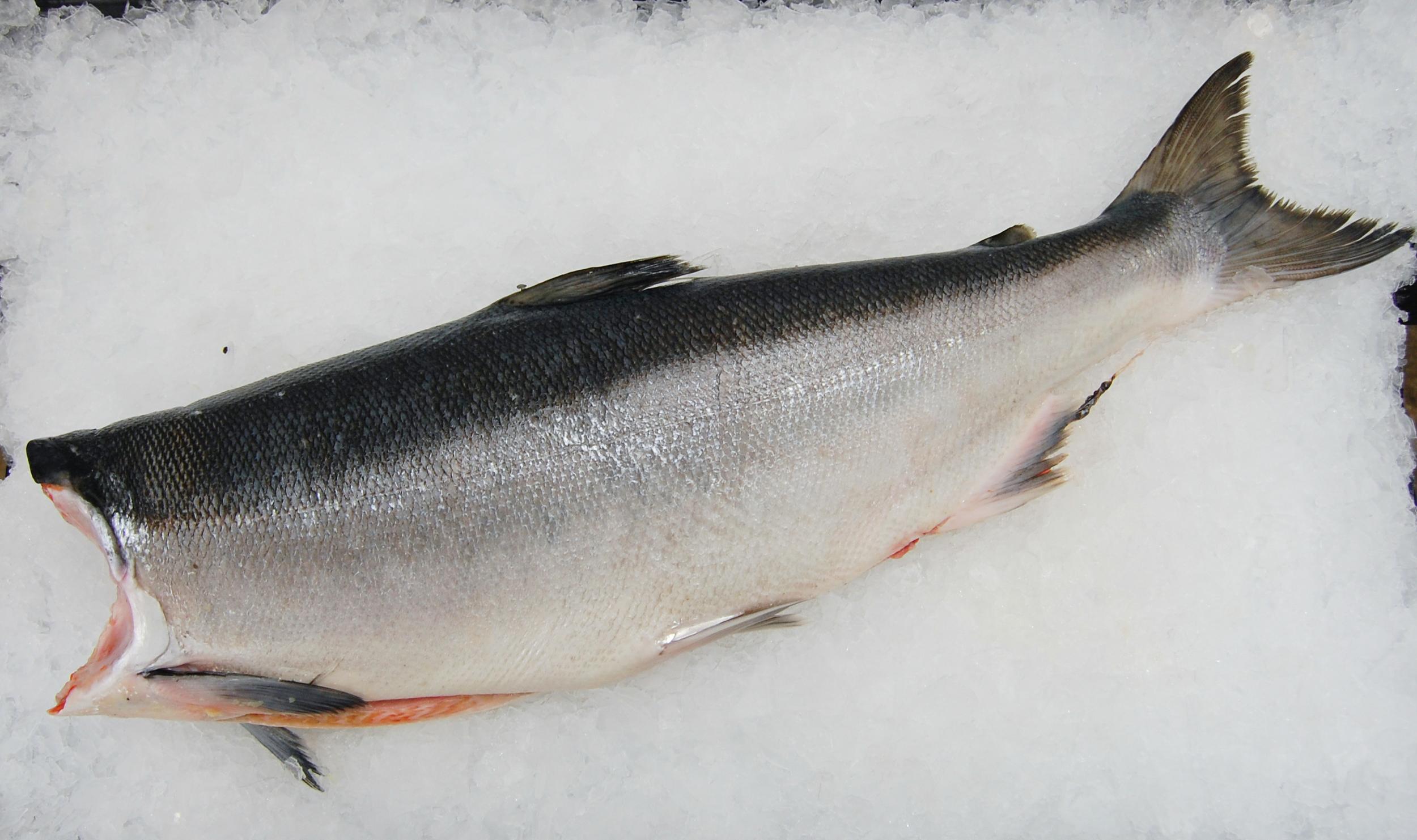 Sockeye Salmon Season: June - August Frozen: A  vailability varies
