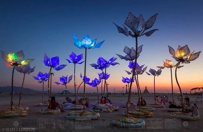 beakerhead 2018 floral illumination.png