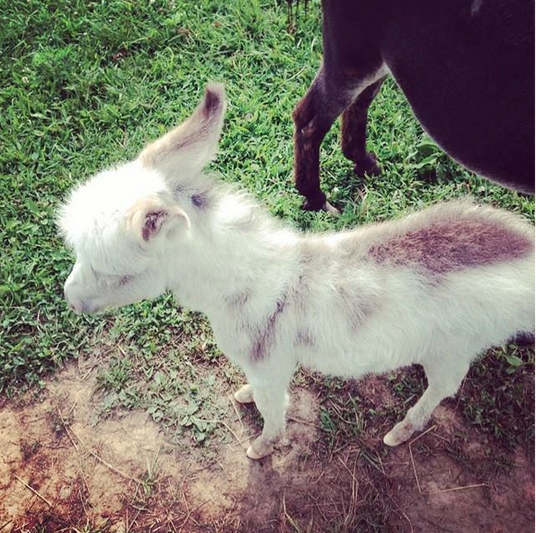summer 2014's new addition to the farm! image via  my instagram