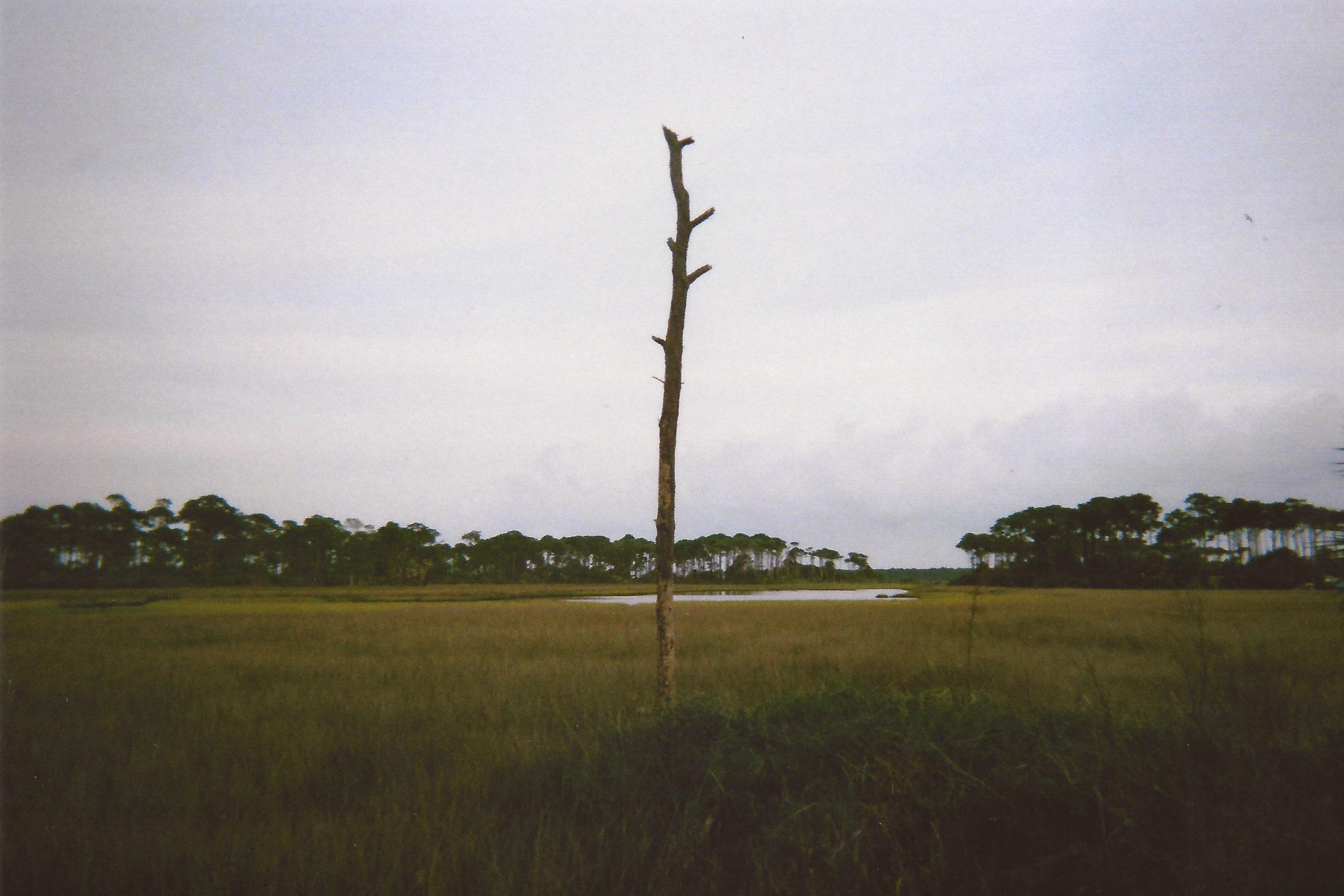 Estuary, St. Joseph Peninsula State Park, Florida 2014