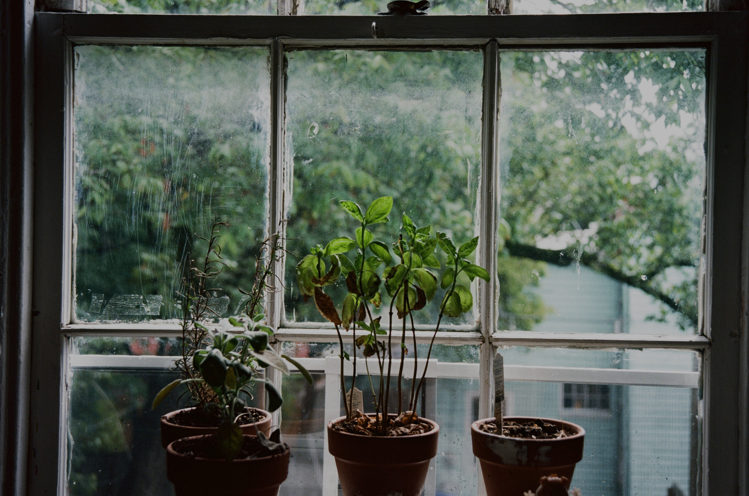 Herbs in Mary's window