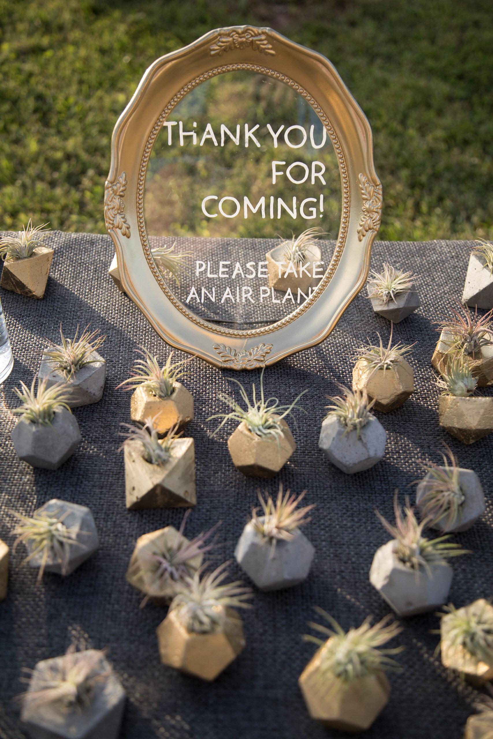 Airplant wedding favors.jpg