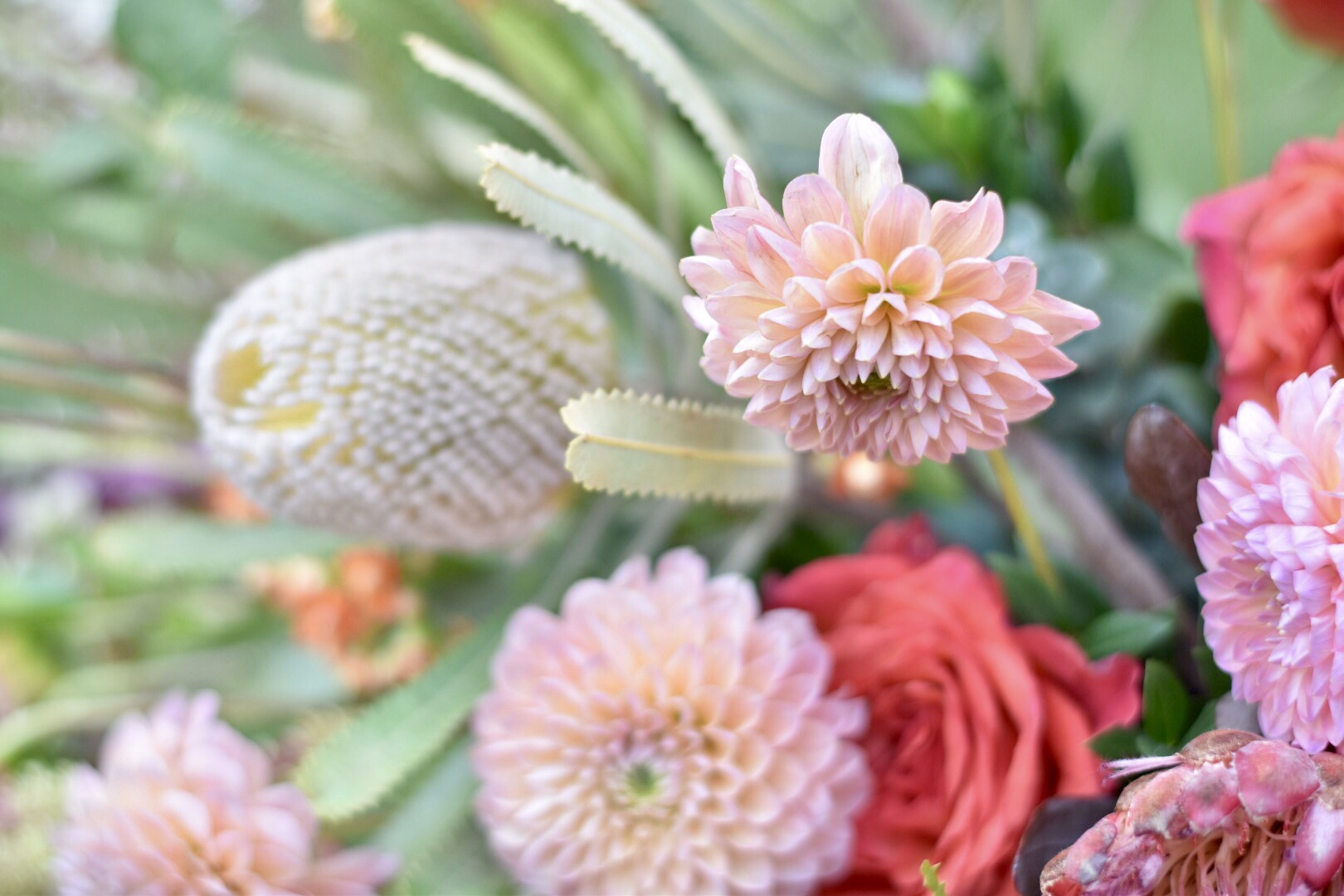 American Grown dahlia and banksia