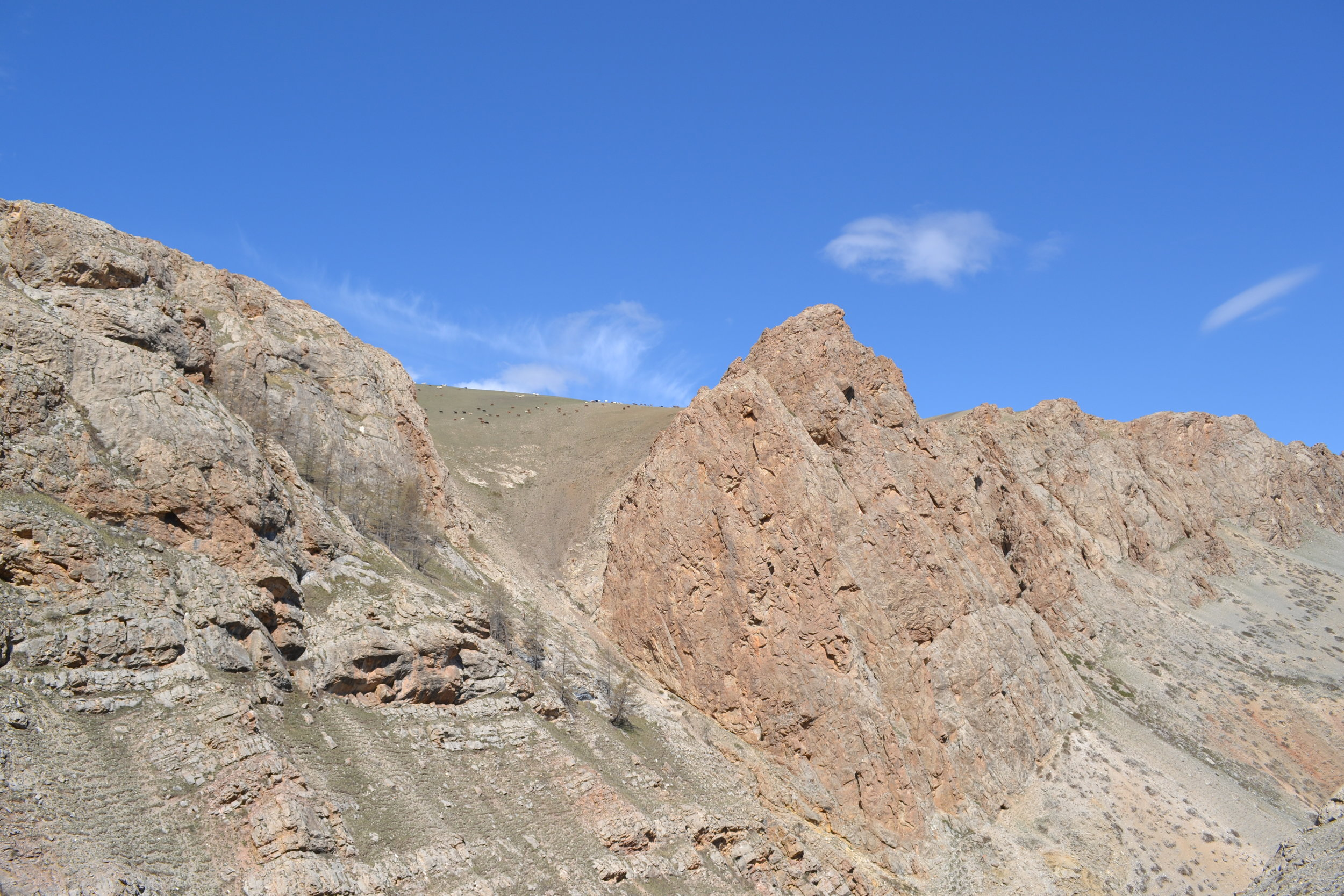 Cambrian archaeocyath reefs in Mongolia