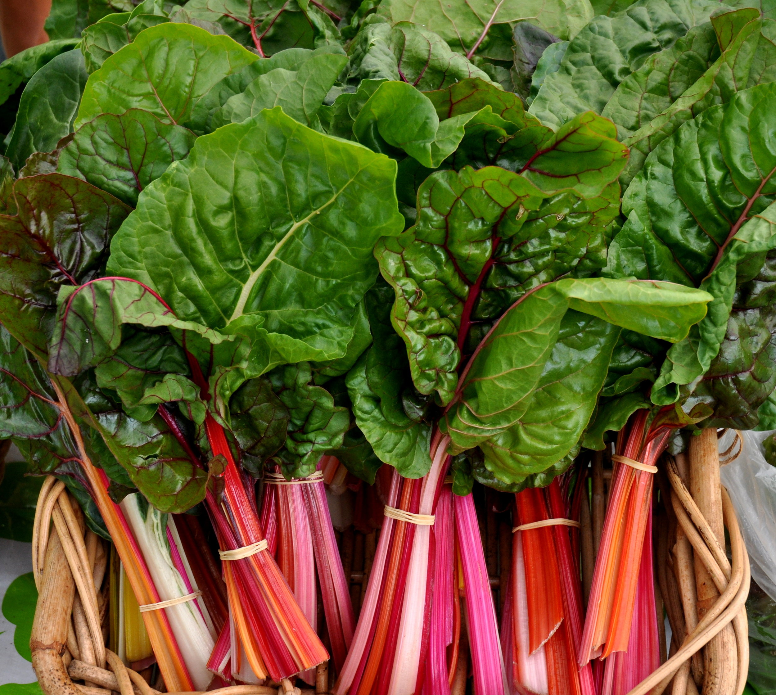 youthrainbowchard_16638805633_o.jpg