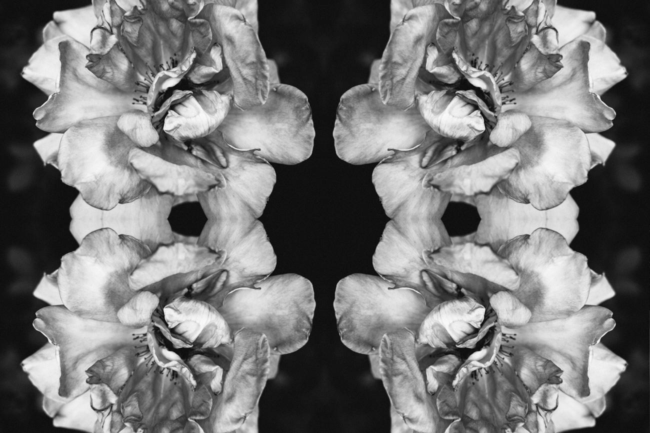 mirrored_3.jpg