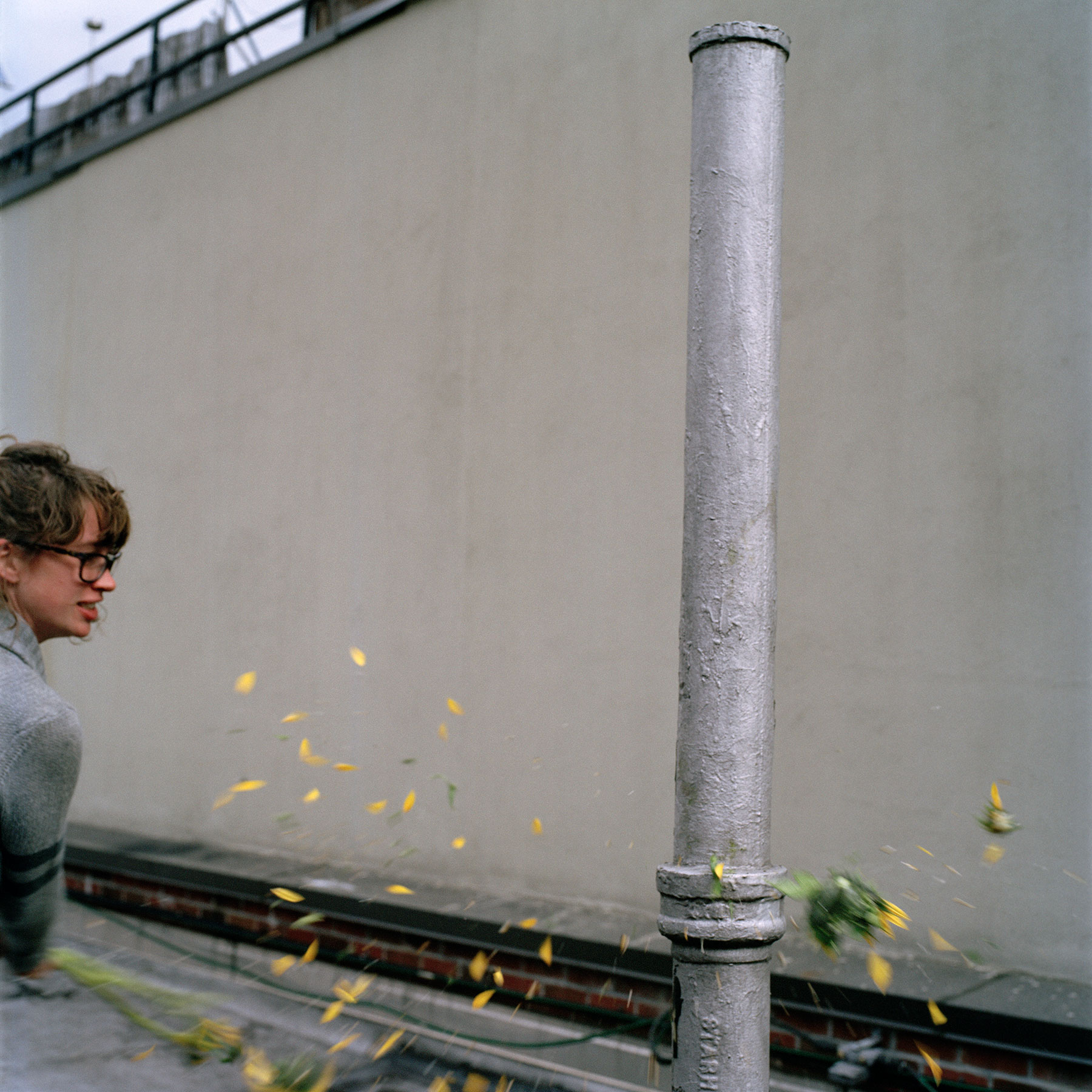 sunflowers_03.jpg