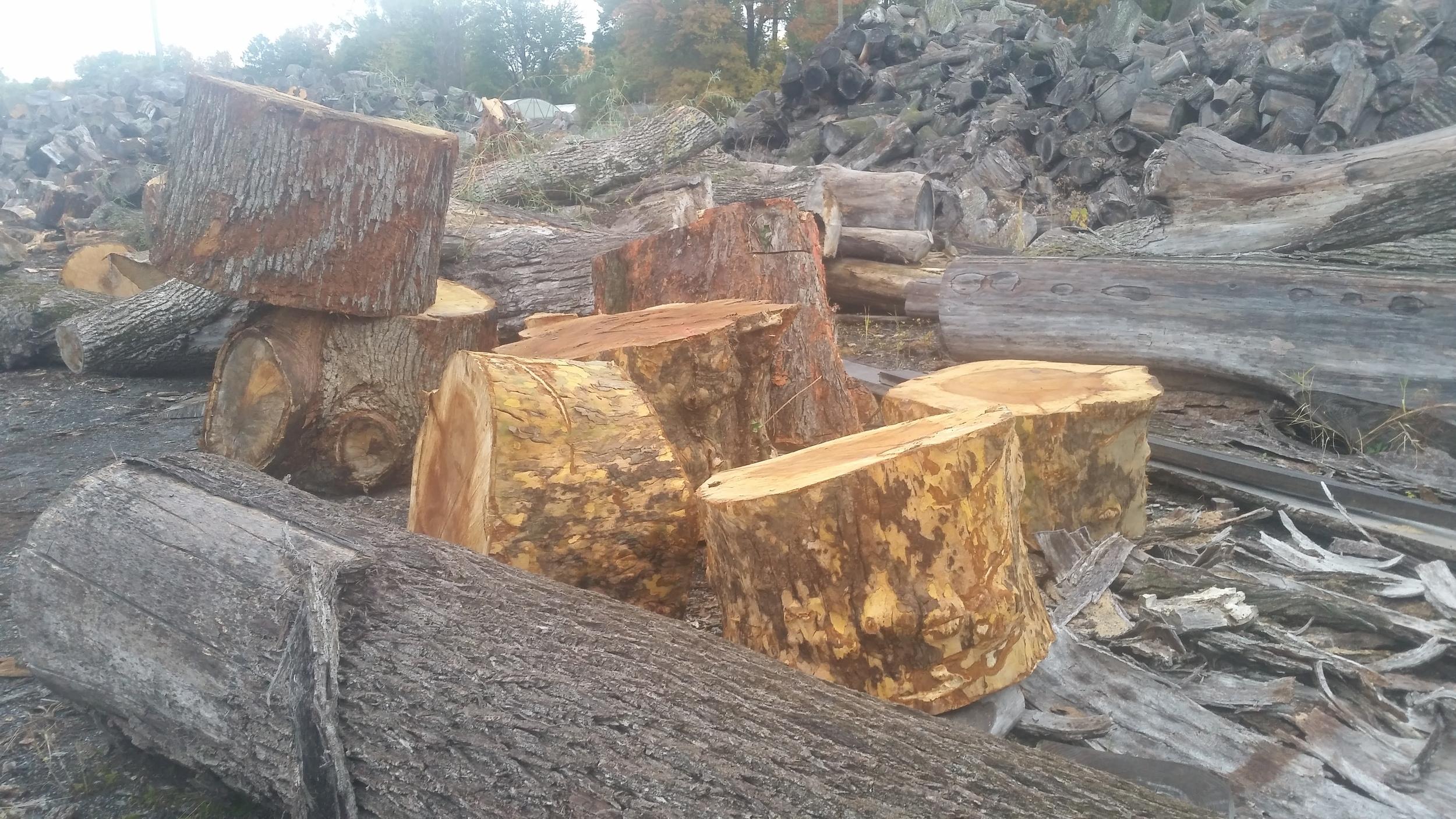 Stumps 4.jpg