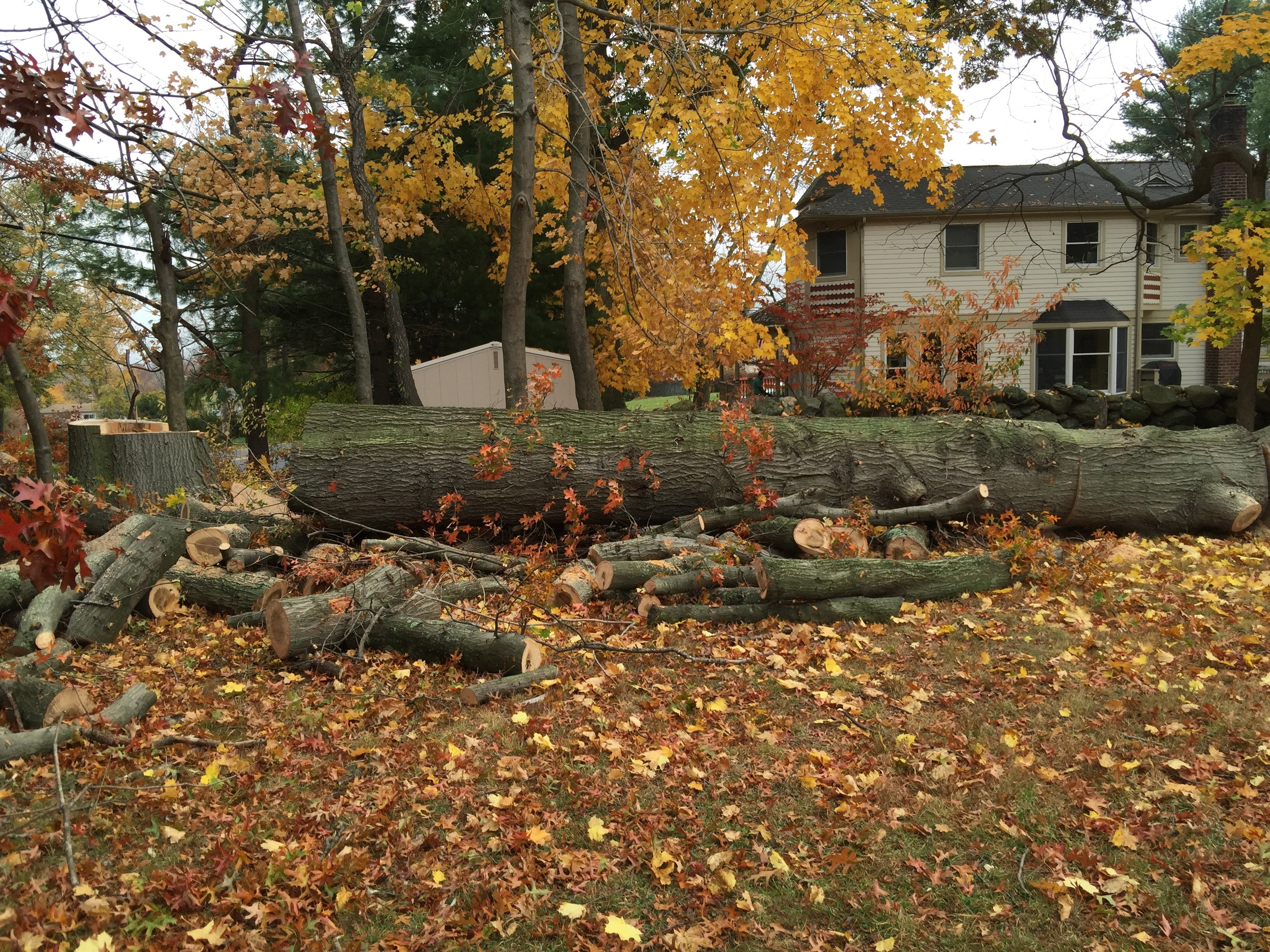 """20'x31-37"""" pin oak log on the property of 94.3 wfas and pretty good music"""