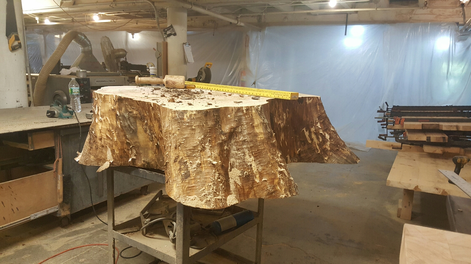 It is one stunning stump that will be an even more stunning table.