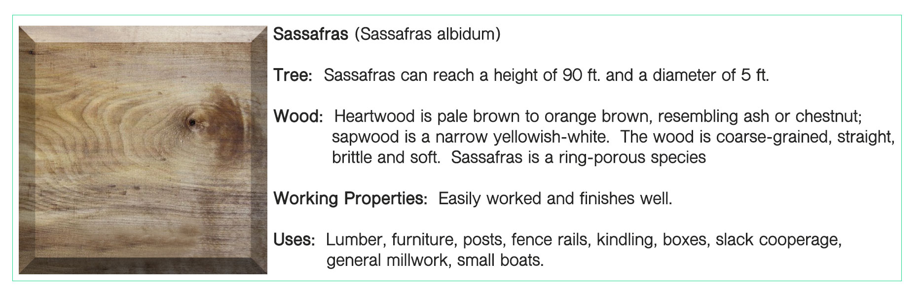 Sassafras-.jpg