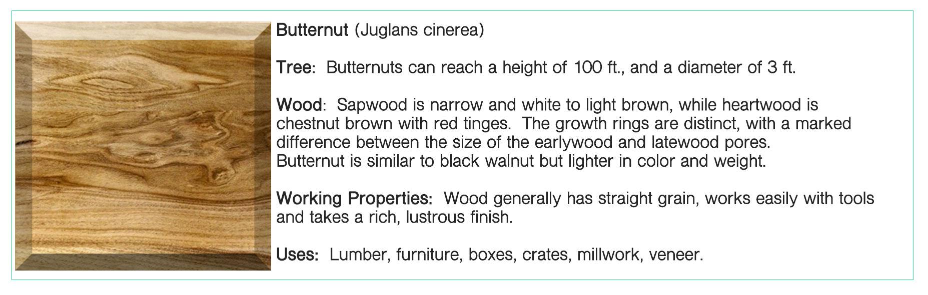 Butternut.jpg