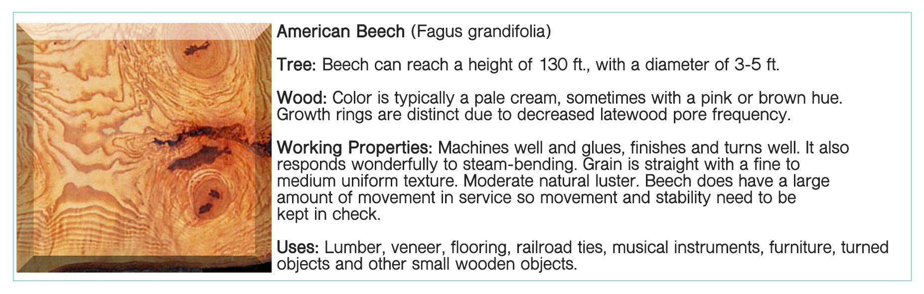 American-Beech.jpg