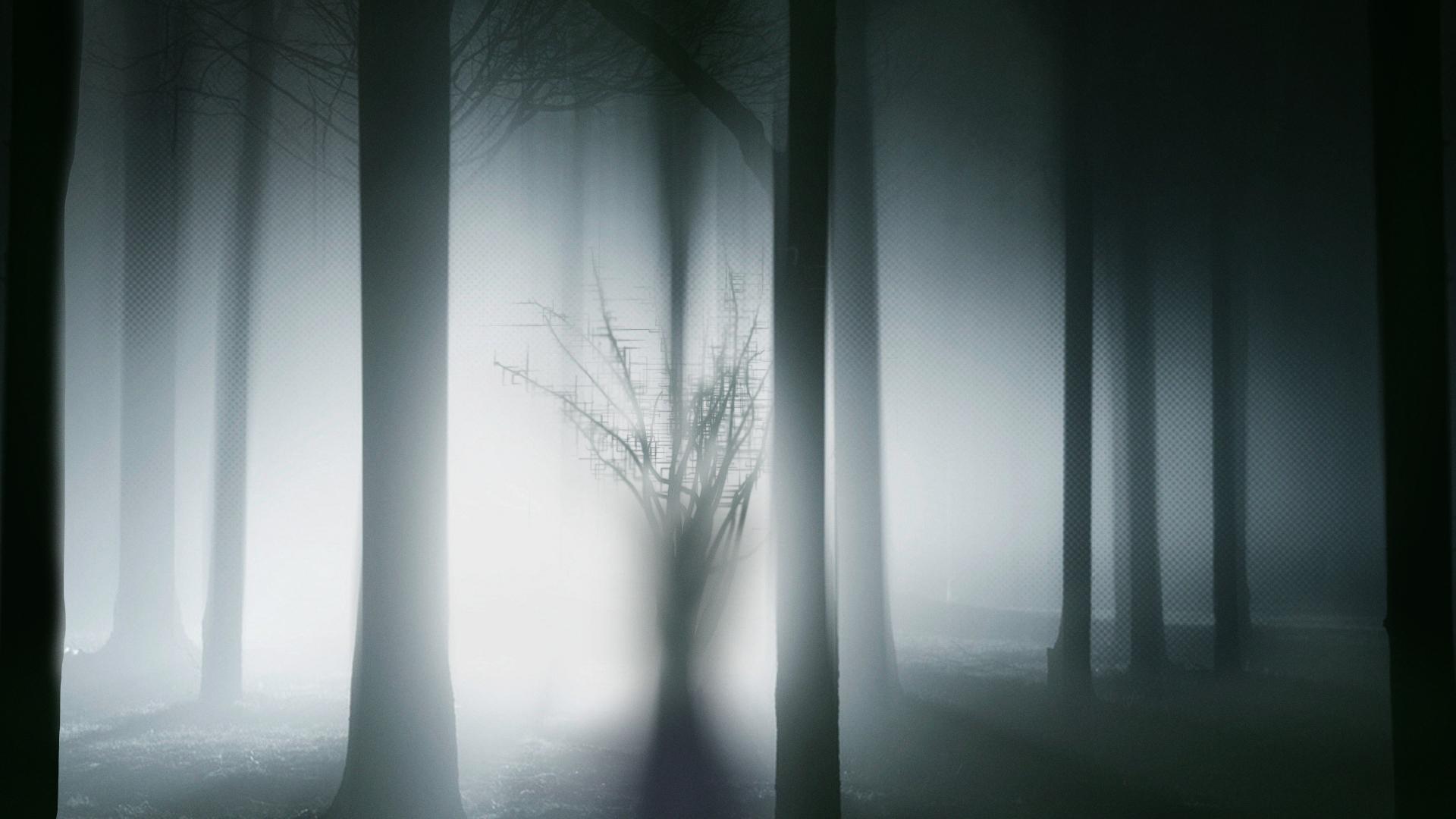 Forest_v002.jpg