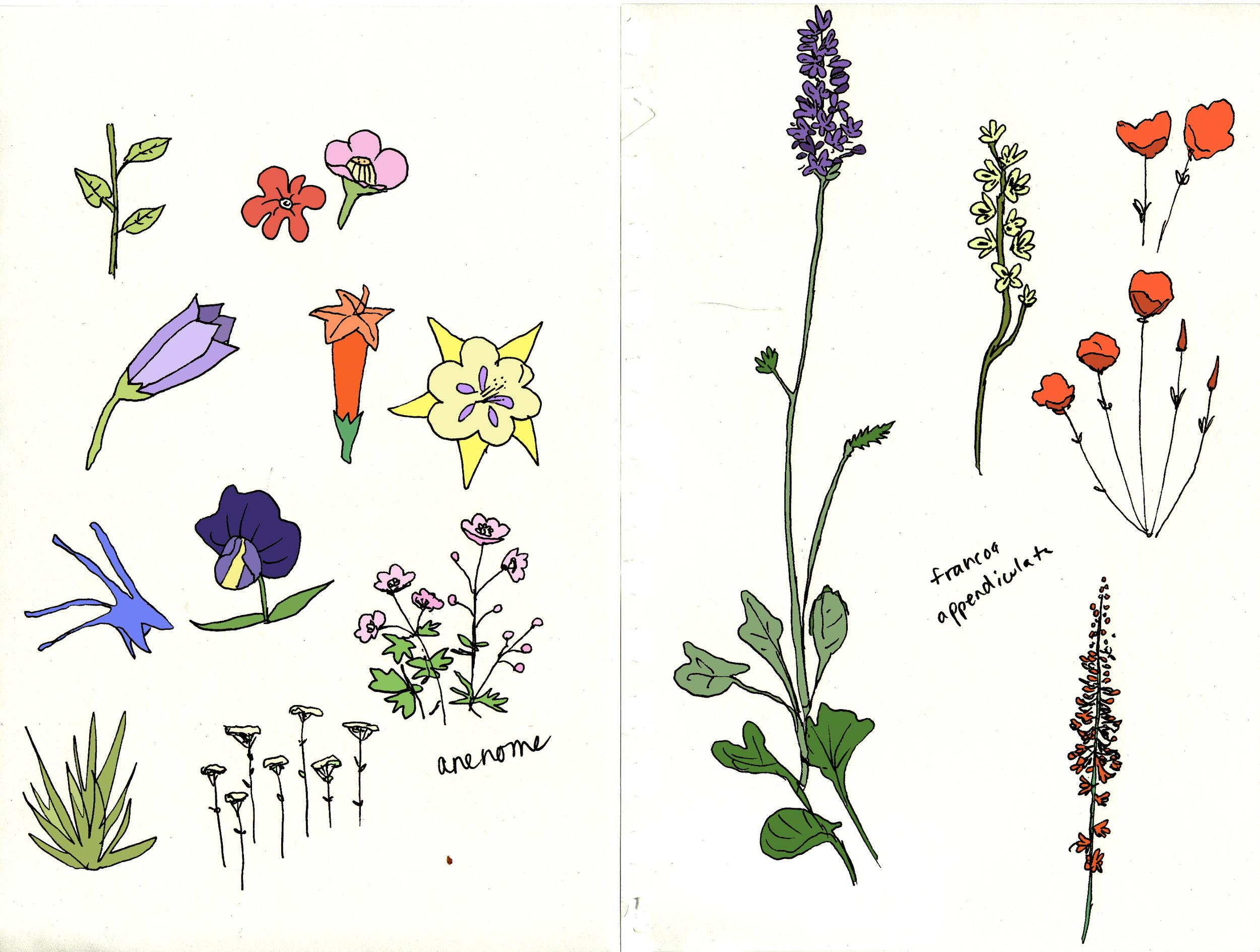 Flower studies, ink and digital color, 2012