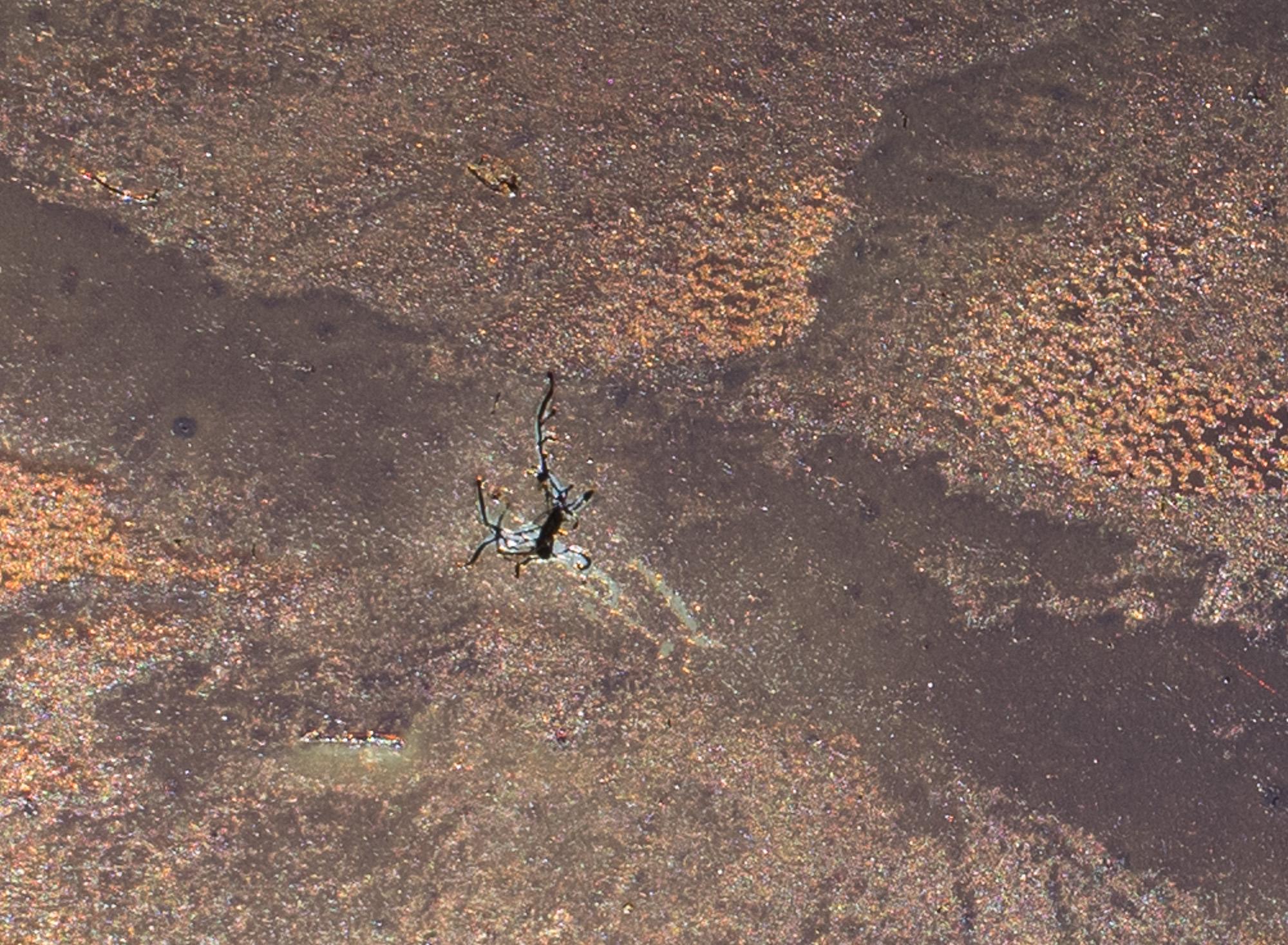 """Strip Mine Horizon to Horizon ( detail). 4""""x6"""" Petrograph on Stainless Steel. V.1, 2014."""