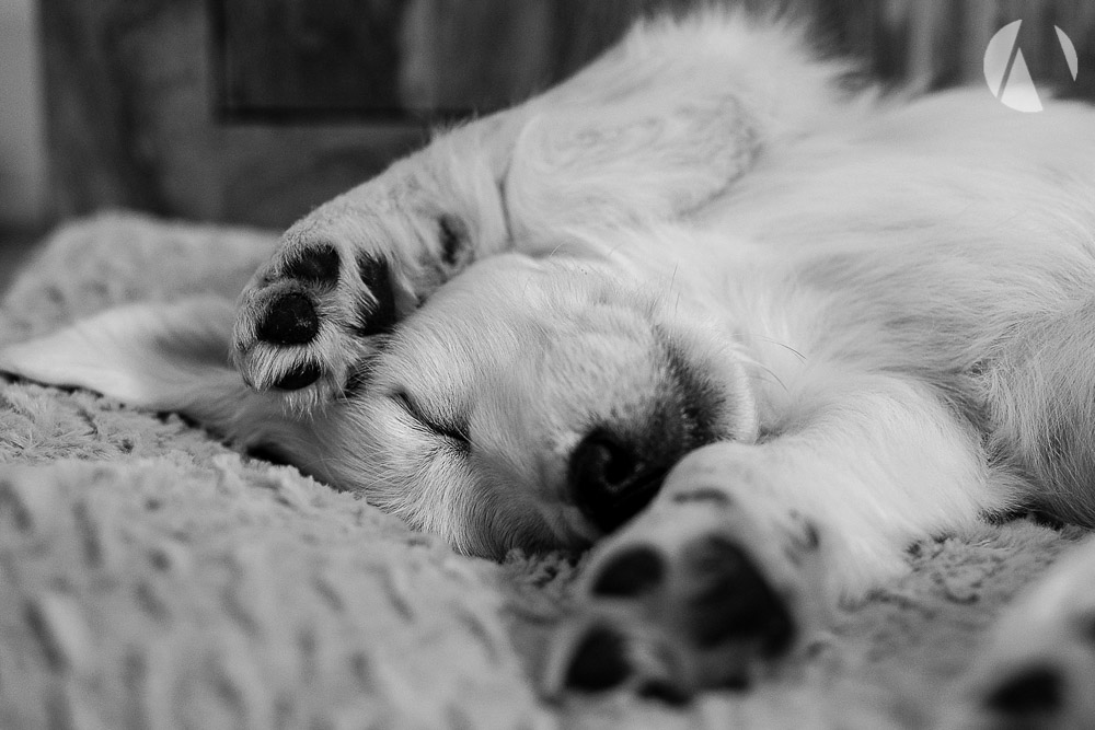 avant-photographic-pets-3.jpg