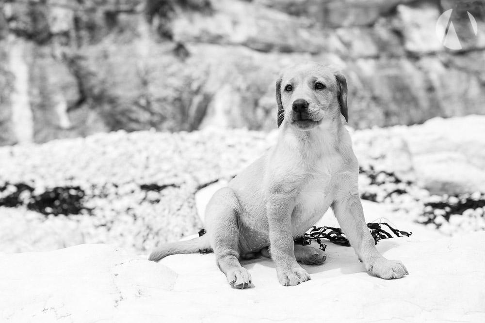 avant-photographic-pets-10.jpg