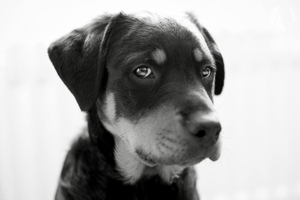 avant-photographic-pets-4.jpg