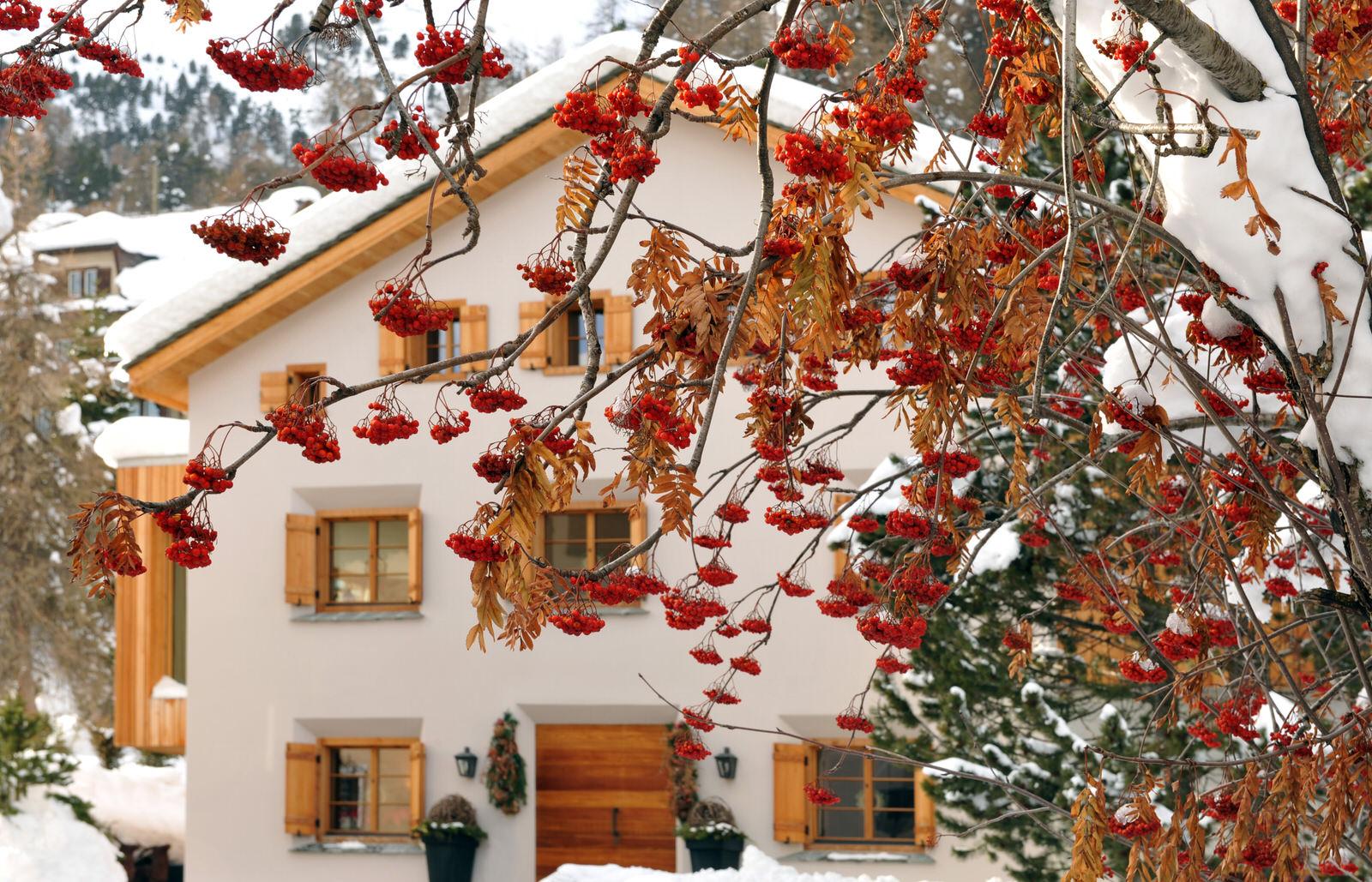 chesetta exterior with berrie.jpg