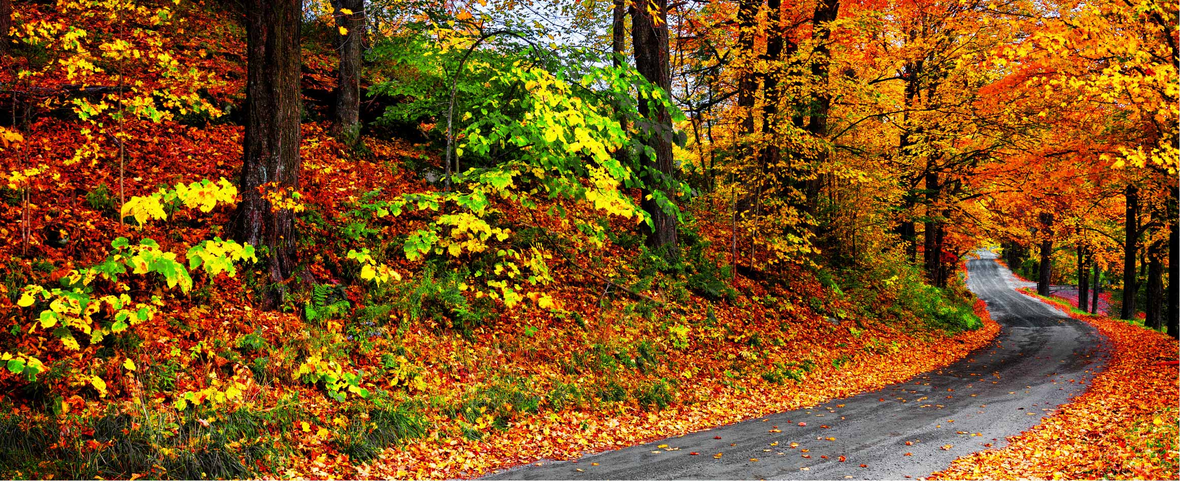 fall auto driving-01.jpg