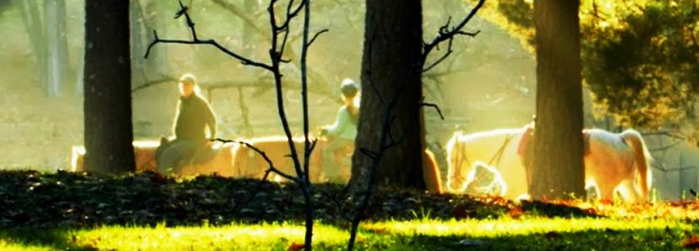 Deer Lake Ranch Resort Horses.jpg