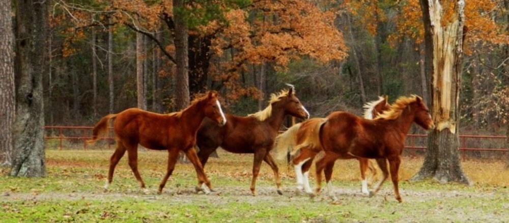 Ponies-1-07.jpg