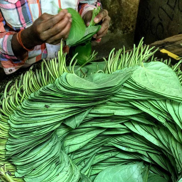 The Betel leaves used to wrap the ingredients